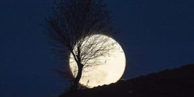 Blooming Love Under the Breathtaking Supermoon