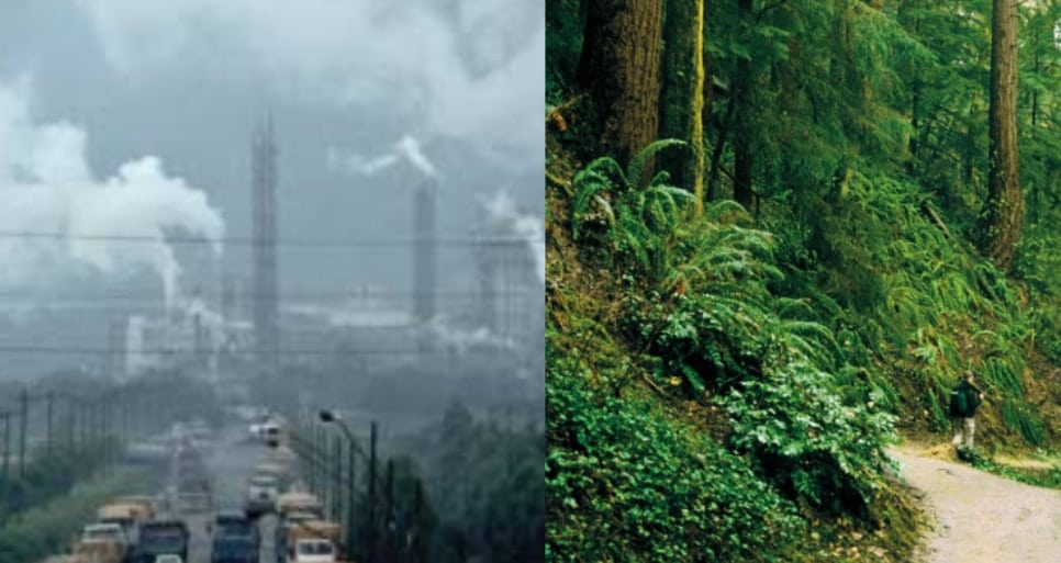 A micro forest is being built in Raipur, the world's 7th most polluted city